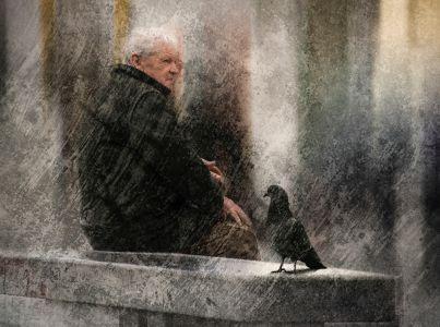 El viejo y la paloma