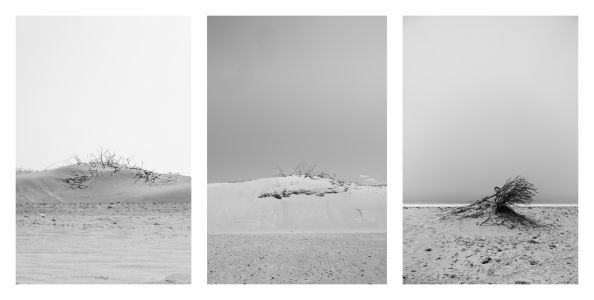 024-paisajes Dinamicos