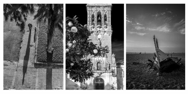 052-Sombras, Citricos Y Patera