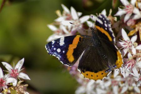 Descanso de mariposa