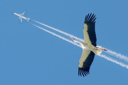 Volando a la par