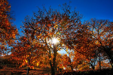 Cálida luz de otoño