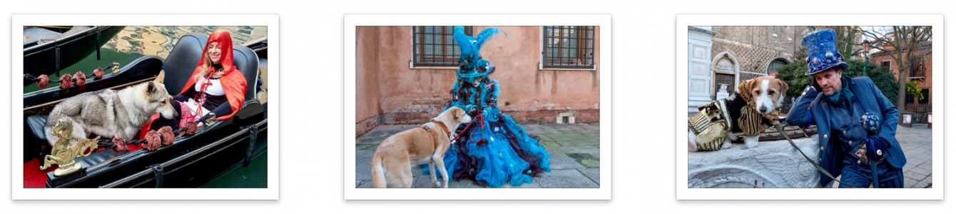Perro Y Carnaval